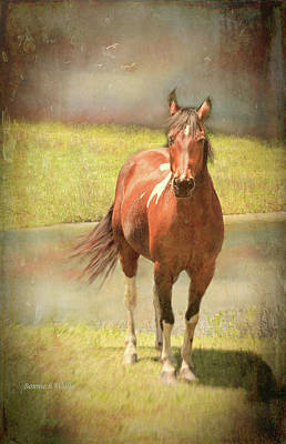 Digital Art - Horseing Around by Bonnie Willis