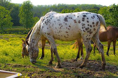 Horses And Buttercups Art Print