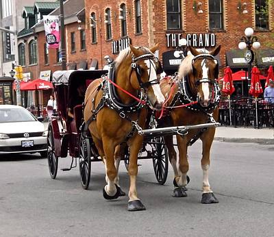 Photograph - Horses And Carriage by Stephanie Moore