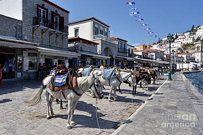 Photograph - Horses And Mules In Hydra Island I by George Atsametakis