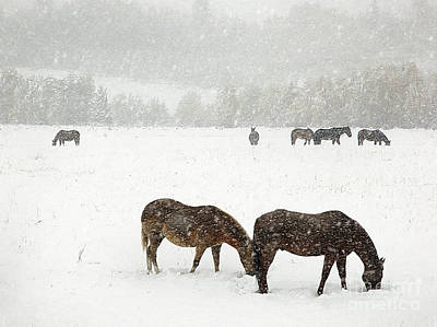 Photograph - Horses And Snow by Clare VanderVeen