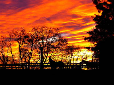 Art Print featuring the photograph Horses And The Sky by Donald C Morgan