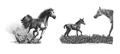 Drawing - Horses  Arabians by Marianne NANA Betts