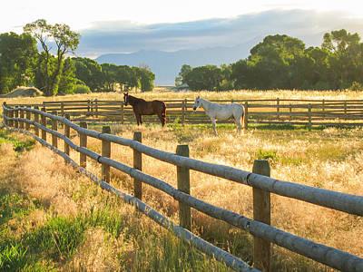 Photograph - Horses at Dawn by Paul Sharman
