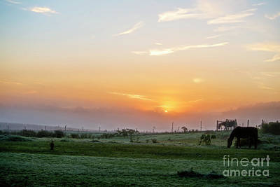 Photograph - Horses At Daybreak by David Arment
