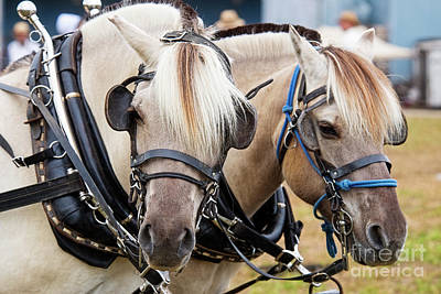 Photograph - Horses At Progress Days by David Arment