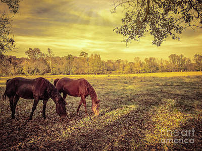 Photograph - Horses At Sunset by Peggy Franz