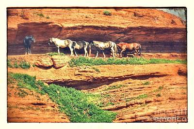 Photograph - Horses Basking In The Sun by Carole Martinez