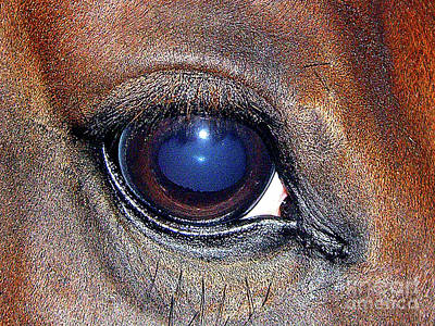 Photograph - Horse's Blue Eye by Merton Allen