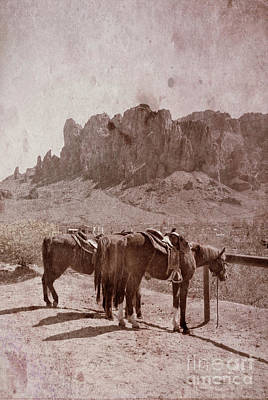Photograph - Horses By Superstition Mountains by Jill Battaglia