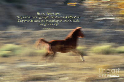 Photograph - Horses Change Lives by Debby Pueschel