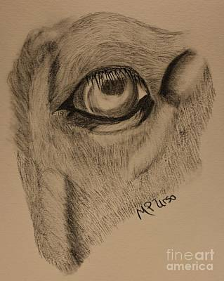 Drawing - Horse's Eye Abstract by Maria Urso