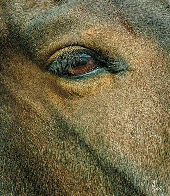Photograph - Horses Eye by Bruce Carpenter