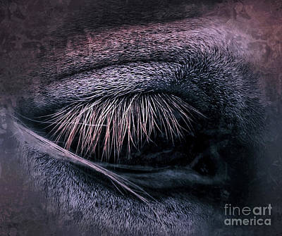 Photograph - Horses Eye-color by Toma Caul