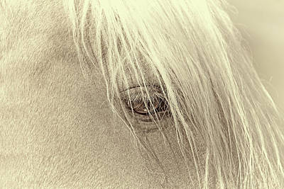 Photograph - Horse's Eye Portrait Beige by Jennie Marie Schell