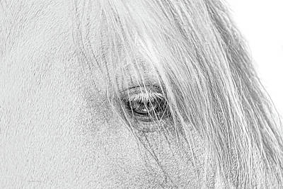 Photograph - Horse's Eye Portrait Monochrome by Jennie Marie Schell