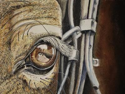 Pastel - Horses Eye by Teresa Smith