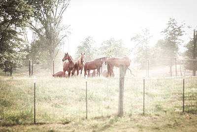 Photograph - Horses Gathered In A Pasture By The Fence by Kelly Hazel