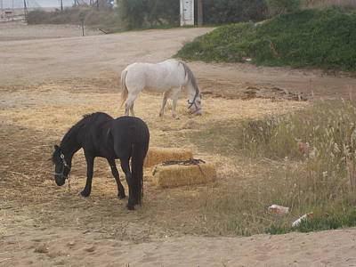 Quadro Photograph - Horses by GiannisXenos Photography