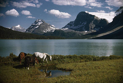 Rocky Mountain Horse Photograph - Horses Graze In A Lakeside Meadow by Walter Meayers Edwards
