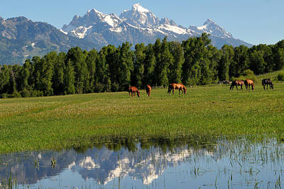 Photograph - Horses Graze In Tetons Reflection by Alan Lenk