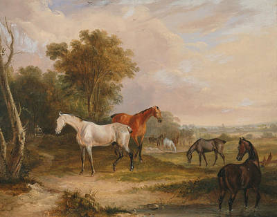 Painting - Horses Grazing - A Grey Stallion Grazing With Mares In A Meadow by Francis Calcraft Turner