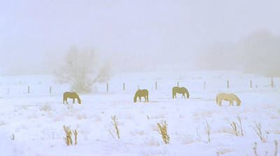 Wintry Mixed Media - Horses Grazing In A Field Of Snow And Fog by Steve Ohlsen