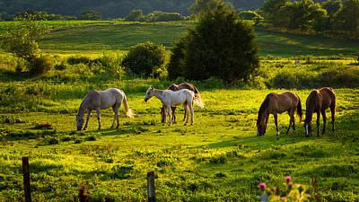 Horses Grazing In Evening Light Art Print