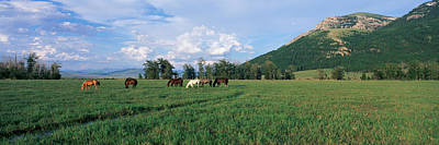 Wildlife Landscape Photograph - Horses Grazing In Pasture by Panoramic Images