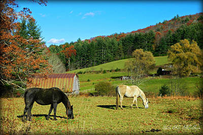 Photograph - Horses Grazing The Pasture by Sheila Kay McIntyre