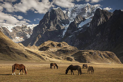 Mountain Range Photograph - Horses Grazing Under Siula Grande by Colin Monteath