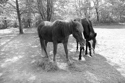 Photograph - Horses In A Field by Angela Murdock