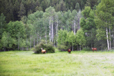 Wyoming Photograph - Horses In Aspen by Hugh Smith