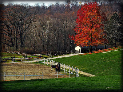 Photograph - Horses In Autumn by Joan  Minchak