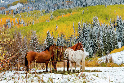 Photograph - Horses In Autumn Mountain Scene With Snow by Teri Virbickis