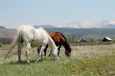 Horses In Colorado Art Print by Brittany Graham