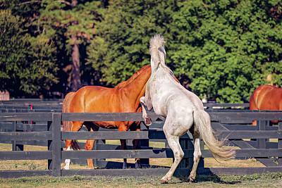 Photograph - Horses In Hilton Head Island by Peter Lakomy