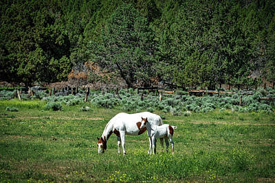 Palomino Foal Photograph - Horses In Meadow - California by Mountain Dreams