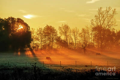 Photograph - Horses In Morning Fog by David Arment