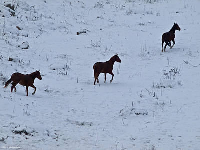 Horses In Snow 3  Art Print