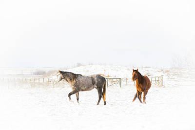 Photograph - Horses In Snow by Windy Corduroy