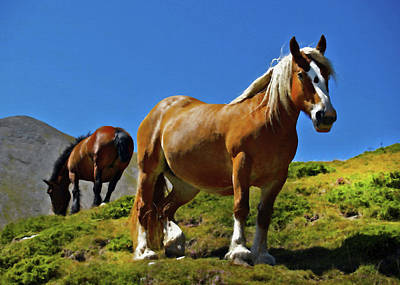 Long Mane Digital Art - Horses In Sunlight by Georgiana Romanovna
