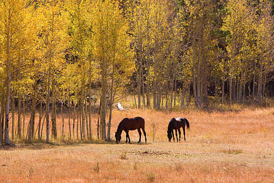 Colorado Autumn Landscapes Photograph - Horses In The Autumn Aspens by James BO  Insogna