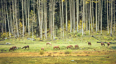 Photograph - Horses In The Dolores River Canyon by John Brink