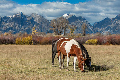 Photograph - Horses In The Grand Tetons by Kathleen Bishop