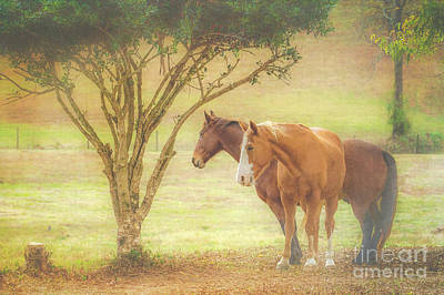 Photograph - Horses In The Meadow by Eleanor Abramson