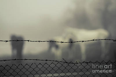 Photograph - Horses In The Mist Behind Barbed Wire by Dimitar Hristov