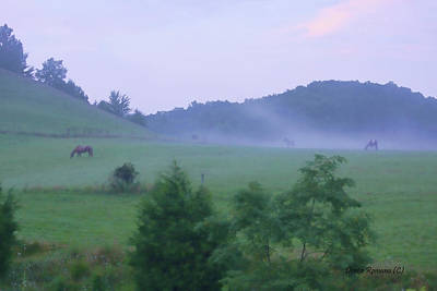 Photograph - Horses In The Mist by Denise Romano