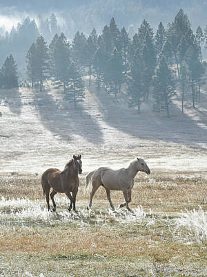 Photograph - Horses In The Morning Light by Keith Boone