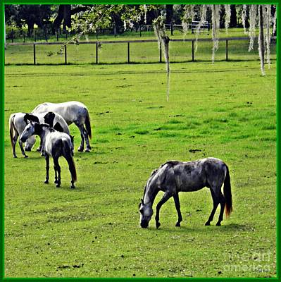 Photograph - Horses In The Pasture  by Sarah Loft